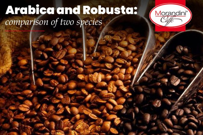 Arabica and Robusta: comparison of two species